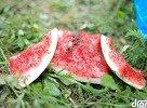 melón a hladné mravce :)
