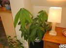 hubart-lampa-a-kvet.jpg