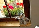 hubart-macka-na-okne.jpg