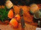 pekné rybičky ;)