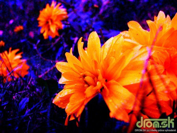 Kvety makro